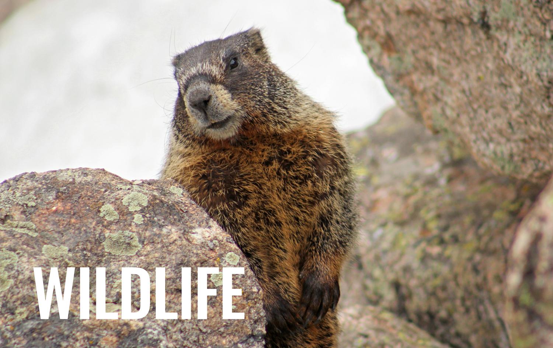 WILDLIFE-tag